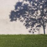 ...und irgendwann habe ich den Baum dann außerhalb des Bildes stehen lassen.